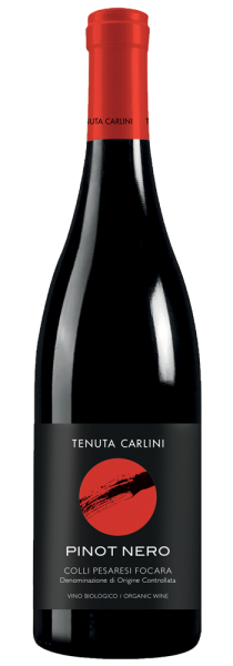 Pinot Nero Colli Pesaresi Focara DOC 2018 - Tenuta Carlini