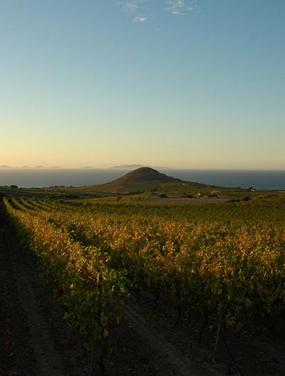 viticoltori romangia