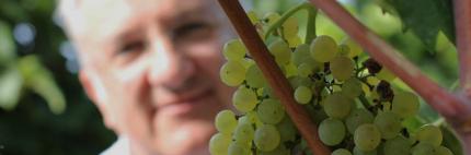 Le Vigne di San Pietro